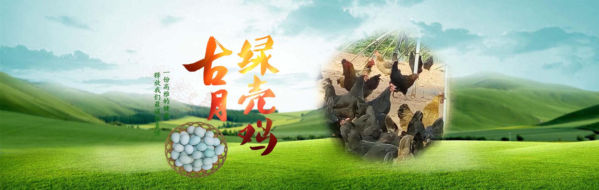 绿壳鸡鸡蛋